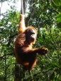 Il video vincitore del cinefestival di milano La Canoa Esplora IL Mondo Discovery Sumatra 2011 edito By Marcello Parmigiani