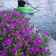 Come tutti gli anni anche il Kayak Team Turbigo ha aderito alla festa dello sport del comune, con un garetta lungo il naviglio tra i partecipanti anche gli amici delleggi tutto...