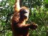 Discovery sumatra 2011